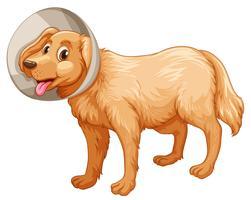 Petit chien avec collier