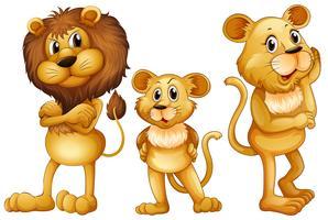Famille lion debout ensemble