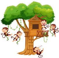 Singes jouant dans la cabane