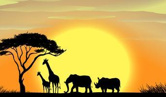 Afrique vecteur