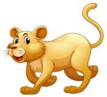 Lion marchant seul sur fond blanc