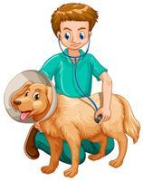 Vétérinaire examinant chien