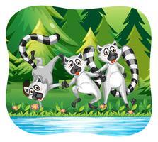 Trois lémuriens heureux au bord du fleuve