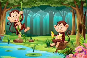Singes vivant dans la jungle vecteur