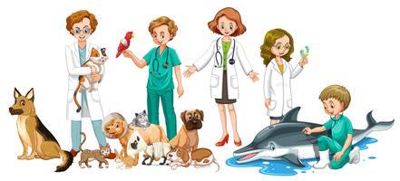 Vétérinaires et nombreux animaux vecteur