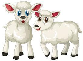 Deux agneaux mignons debout vecteur