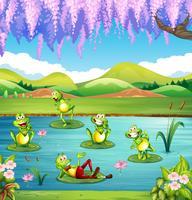 Grenouilles vivant dans l'étang vecteur