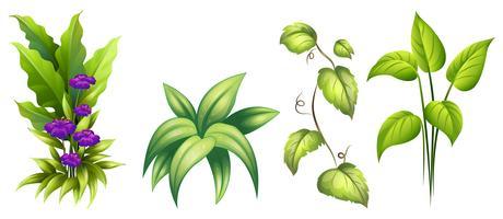 Ensemble de plante isolée vecteur