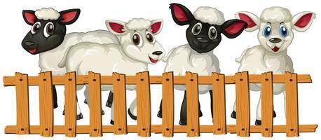 Quatre agneaux derrière la clôture vecteur