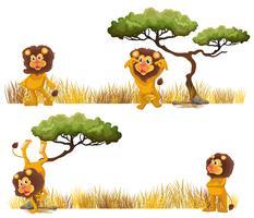 Lions vivant dans les champs vecteur