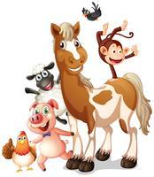 Différents types d'animaux de la ferme