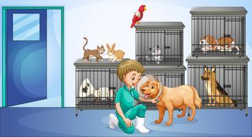 Vétérinaire et beaucoup d'animaux dans la cage vecteur