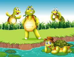 Des tortues vecteur
