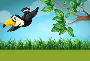 Scène avec toucan volant dans le champ