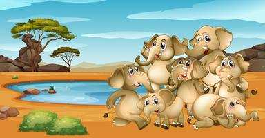 De nombreux éléphants vivant au bord de l'étang vecteur