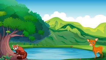 Scène avec des daims et des pandas rouges au bord de l'étang