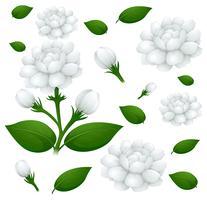 Fond transparent avec des fleurs de jasmin vecteur