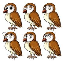 Chouette brune avec différentes expressions faciales