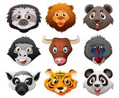 Différents visages d'animaux sauvages