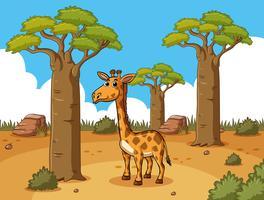 Girafe en terre du désert vecteur