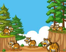 Tigres sur la montagne pendant la journée