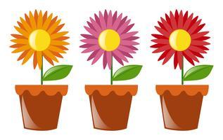 Pots de fleurs avec trois fleurs vecteur