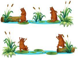 Castors vivant au bord de l'étang