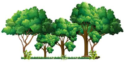 Scène avec beaucoup d'arbres vecteur