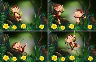 Singes vivant dans la forêt