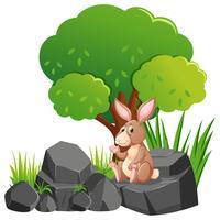 Lapin brun sur le rocher