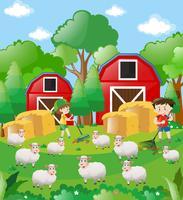 Garçons et moutons dans la basse-cour