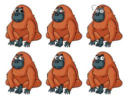Urangutan avec différentes émotions