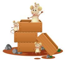 Beaucoup de rats dans des boîtes en bois