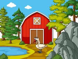 Scène de la ferme avec oie par la grange