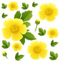 Fond transparent avec des fleurs de renoncule jaune vecteur