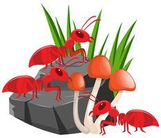 Trois fourmis rouges sur le rocher vecteur