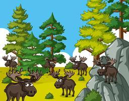 Moose vivant en forêt vecteur
