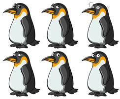 Pingouins avec différentes expressions faciales