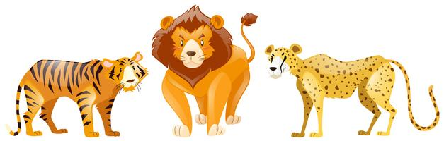 Tigres et lion sur fond blanc