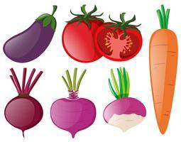 Différents types de légumes colorés vecteur