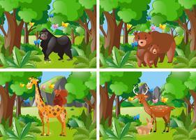 Quatre scènes de forêt avec des animaux sauvages vecteur