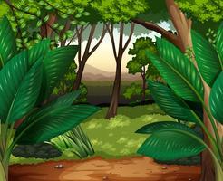 Scène de forêt avec beaucoup d'arbres