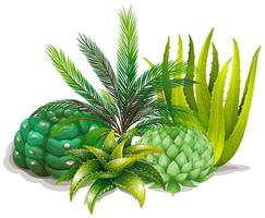 Différents types de plantes dans un jardin