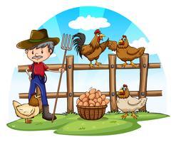 Poulet fermier avec des oeufs