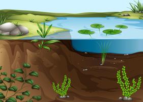 Un écosystème d'étang