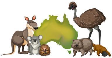 Animaux sauvages en Australie vecteur