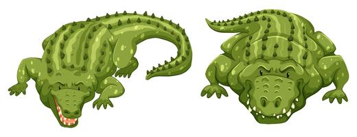 crocodiles vecteur