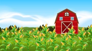 Scène avec champ de maïs vecteur