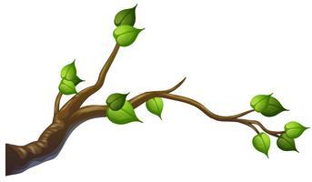 Branche d'arbre sur fond blanc vecteur