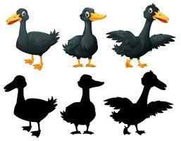 Ensemble de canard noir sur backgroung blanc vecteur